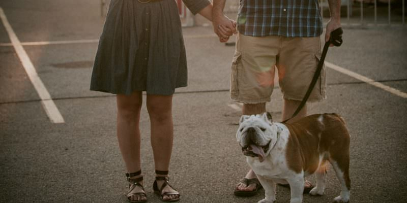 Madison WI Family Photographer, Pet Photography, Middleton WI Photographer