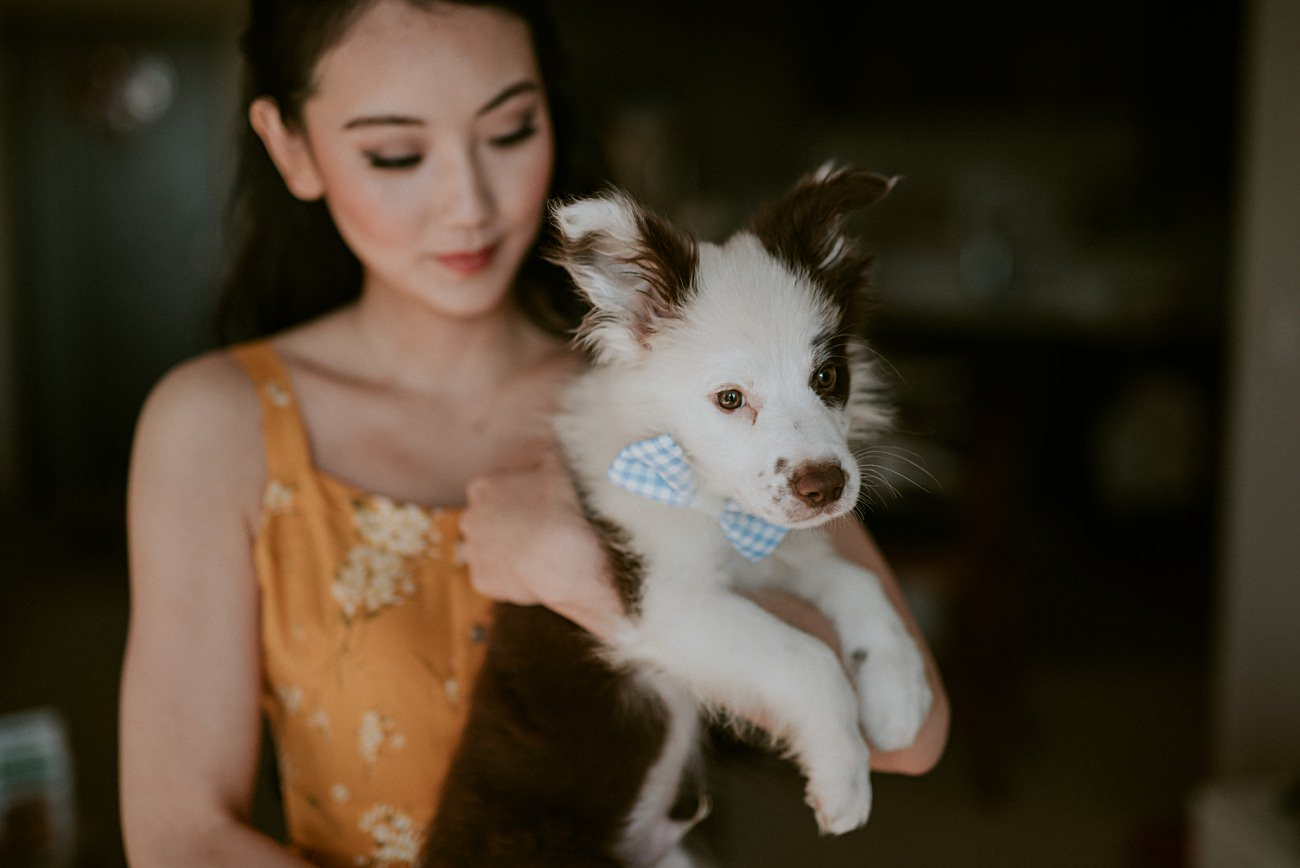 Bride with puppy, dog photos, wedding day with dogs, madison wi photographer