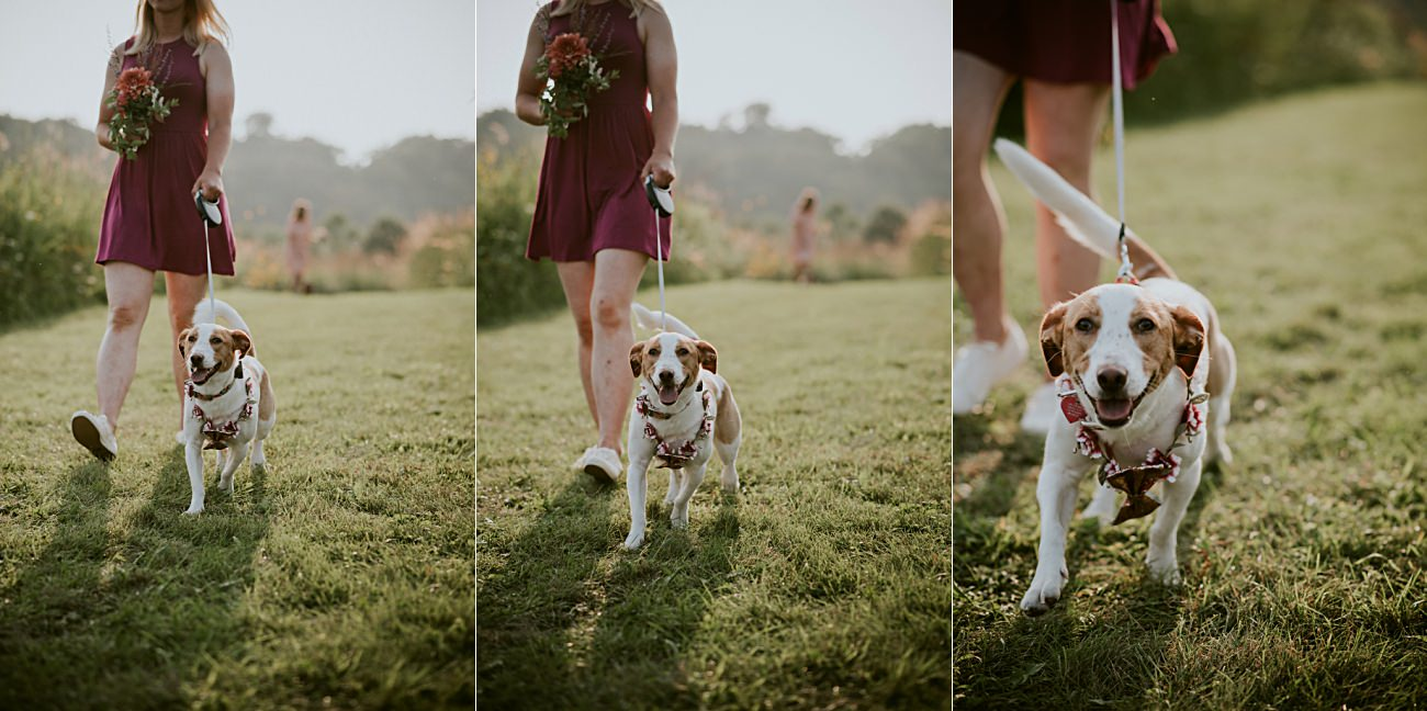 Weddings with Dogs, First Look, Mt Horeb Wisconsin Backyard Wedding - Madison Wisconsin Wedding Photographer
